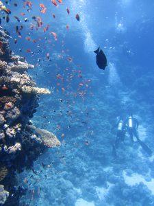 divers underwater ocean swim 68767 1 1