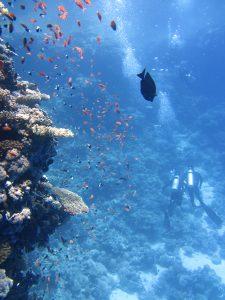 divers underwater ocean swim 68767